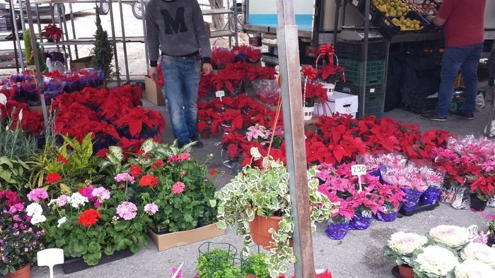 Blommor i Marbella