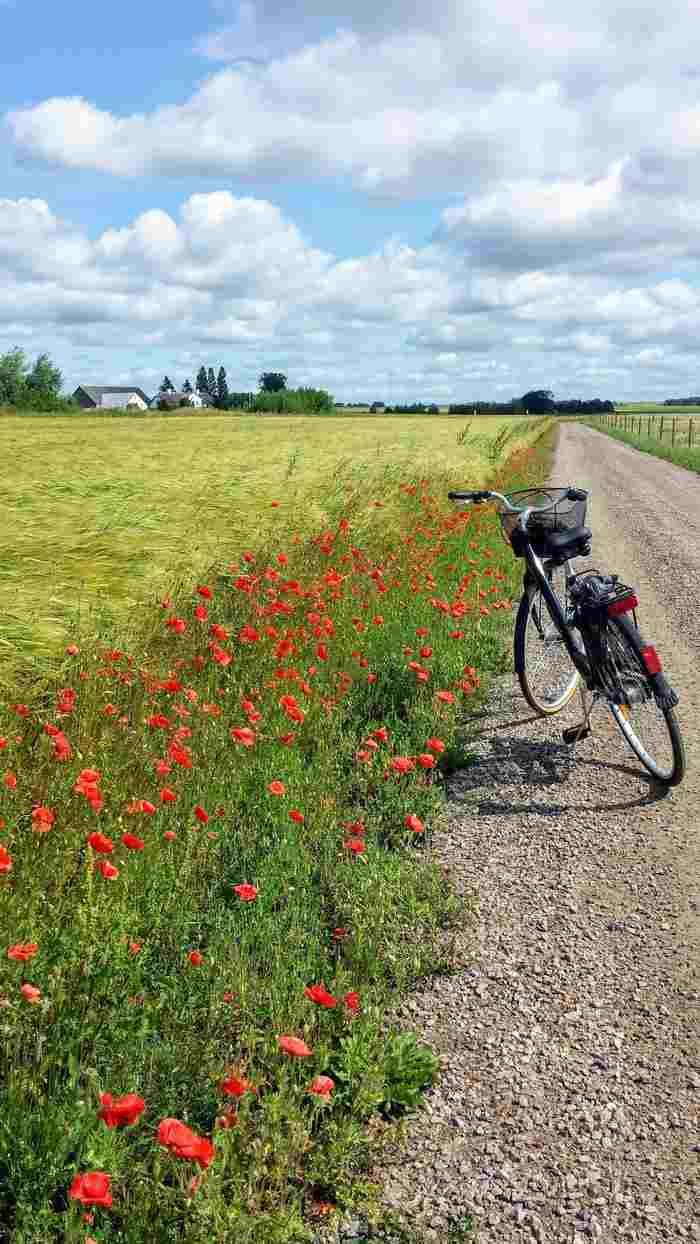Cykel vid landsväg