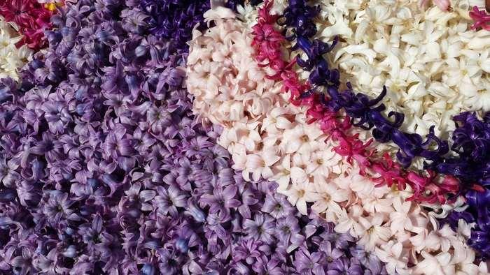 Hyacintblommor