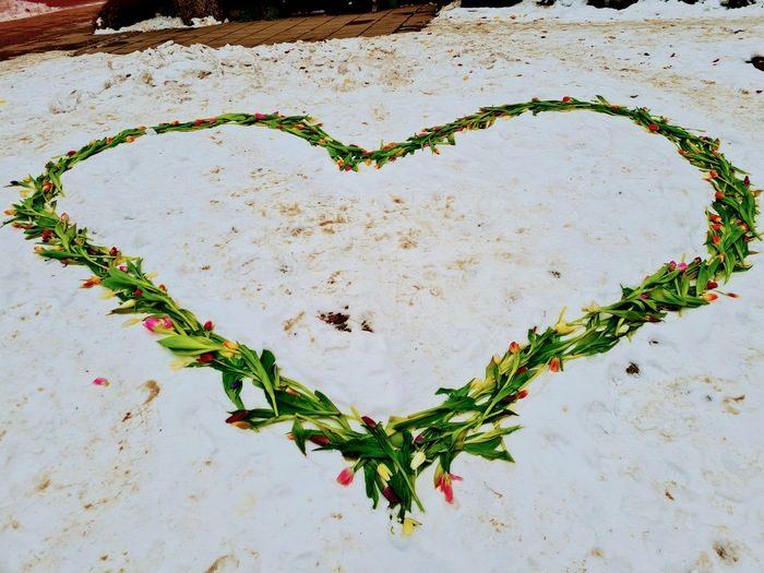 Hjärta av tulpaner