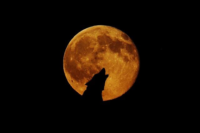 Varg och fullmåne