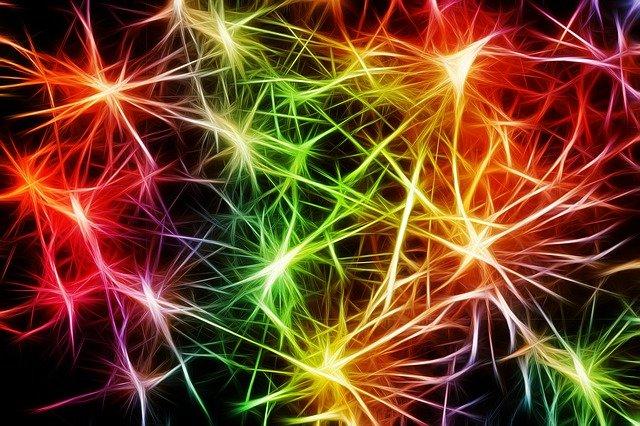 Nerver och celler
